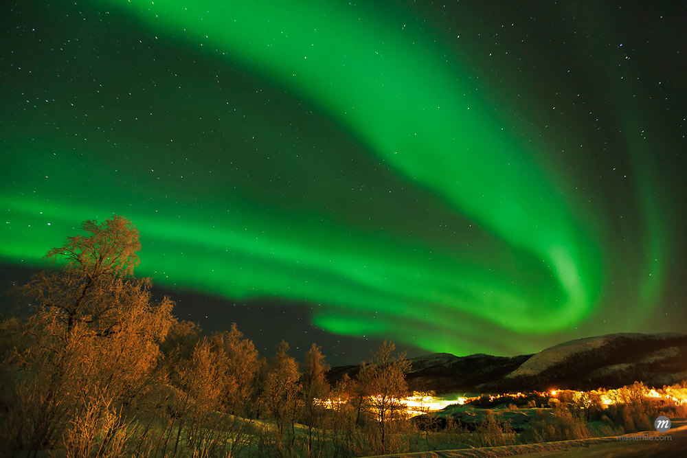 Northern lights over birches with glow from village in Troms Fylke, Senja, Stoennesbotn, Norway  © Frank Krahmer / Masterfile