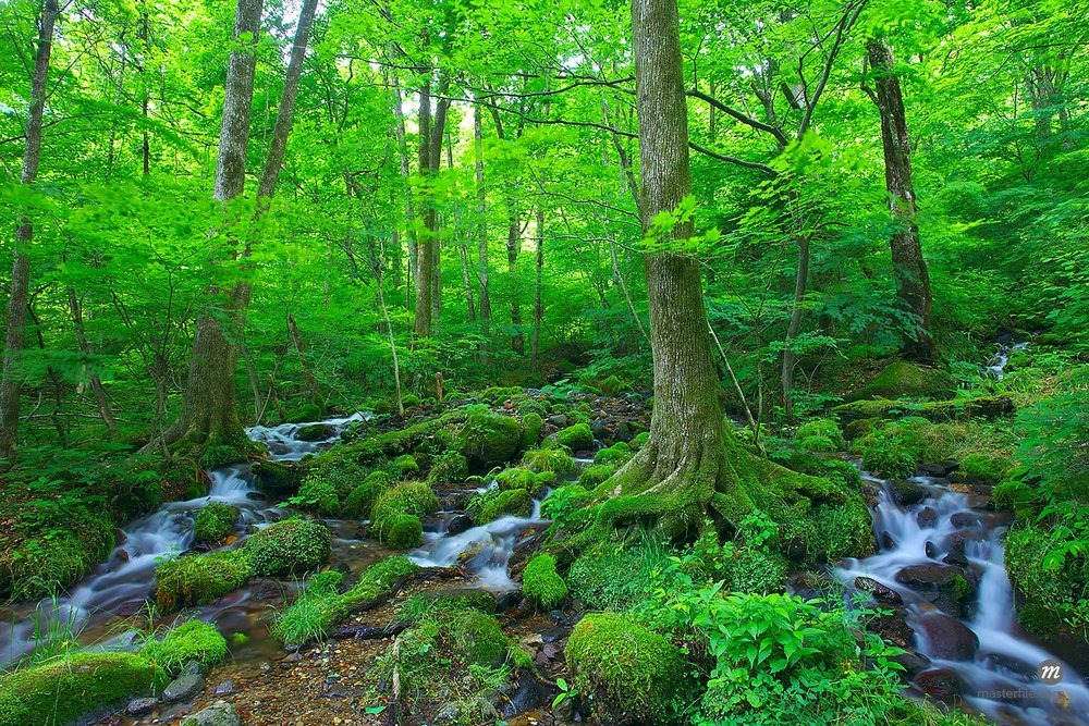 Wooded area with streams, Tochigi Prefecture, Japan  © Aflo Reflex / Masterfile