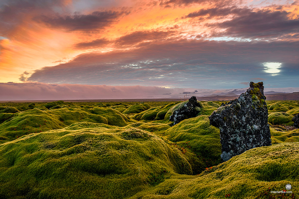 Moss covered landscape at sunset, Eldhraun, Iceland © Masterfile
