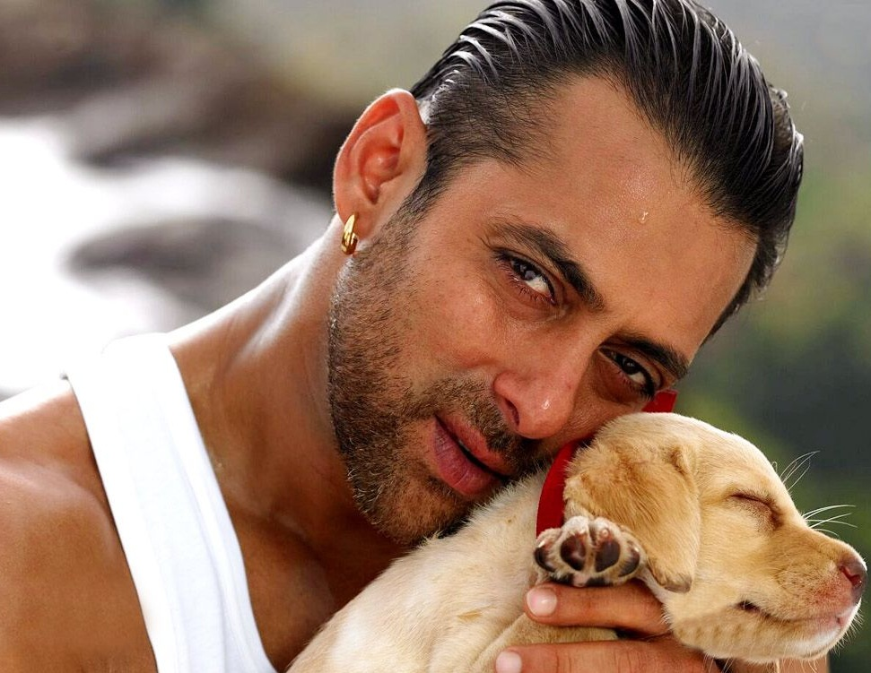 Salman Khan will have no film release this year.