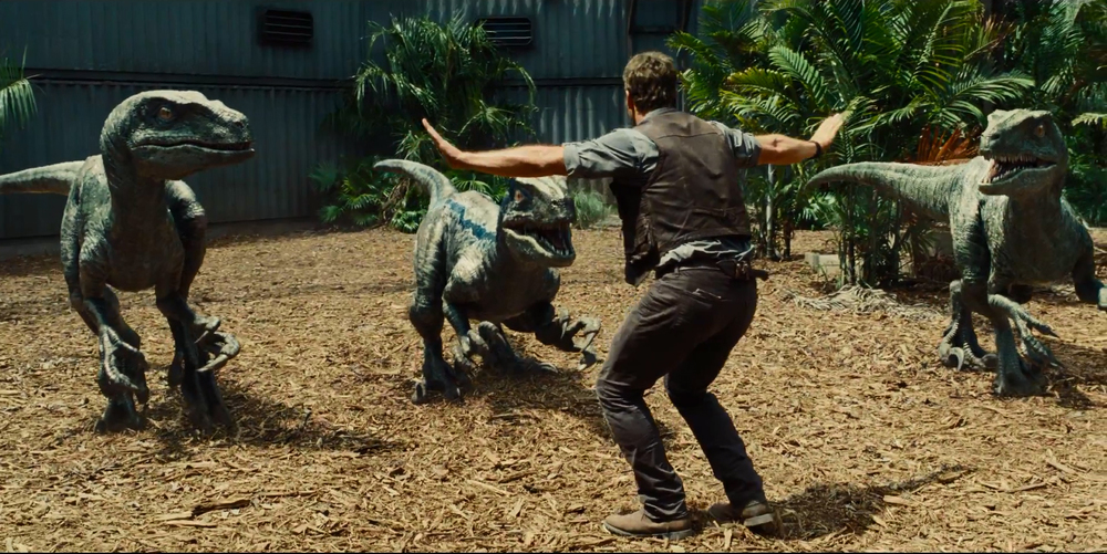 Pratt trains a bunch of Raptors in Jurassic World