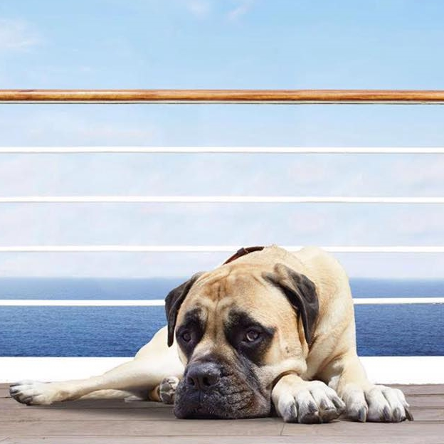 A boxer dog by the name of Pluto has a key part to play in Zoya Akhtar's romance Dil Dhadakne Do