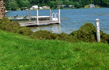 Invasive Weed Piles