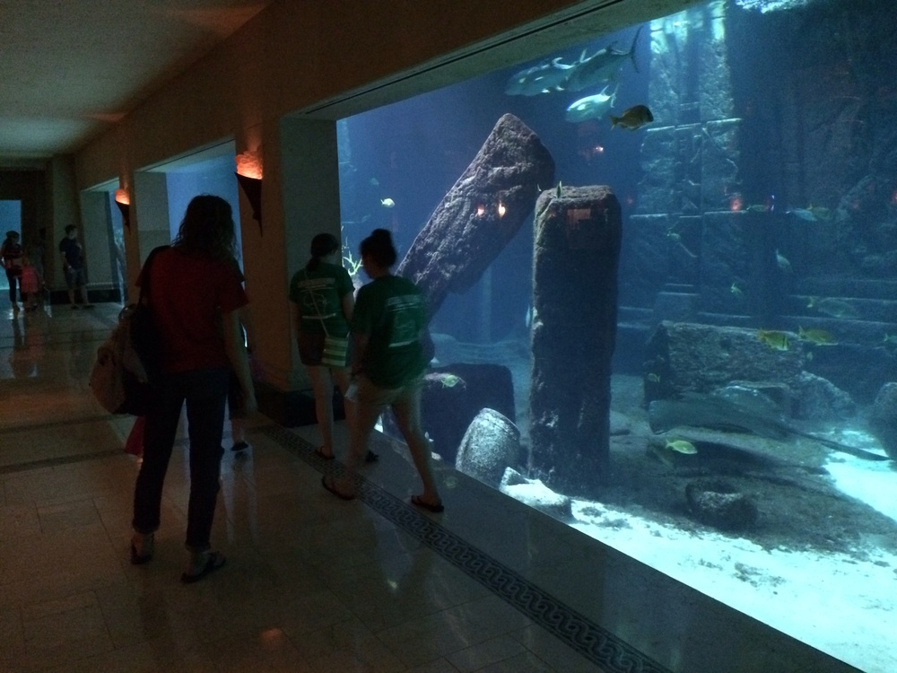 the DIG aquarium...awesome!