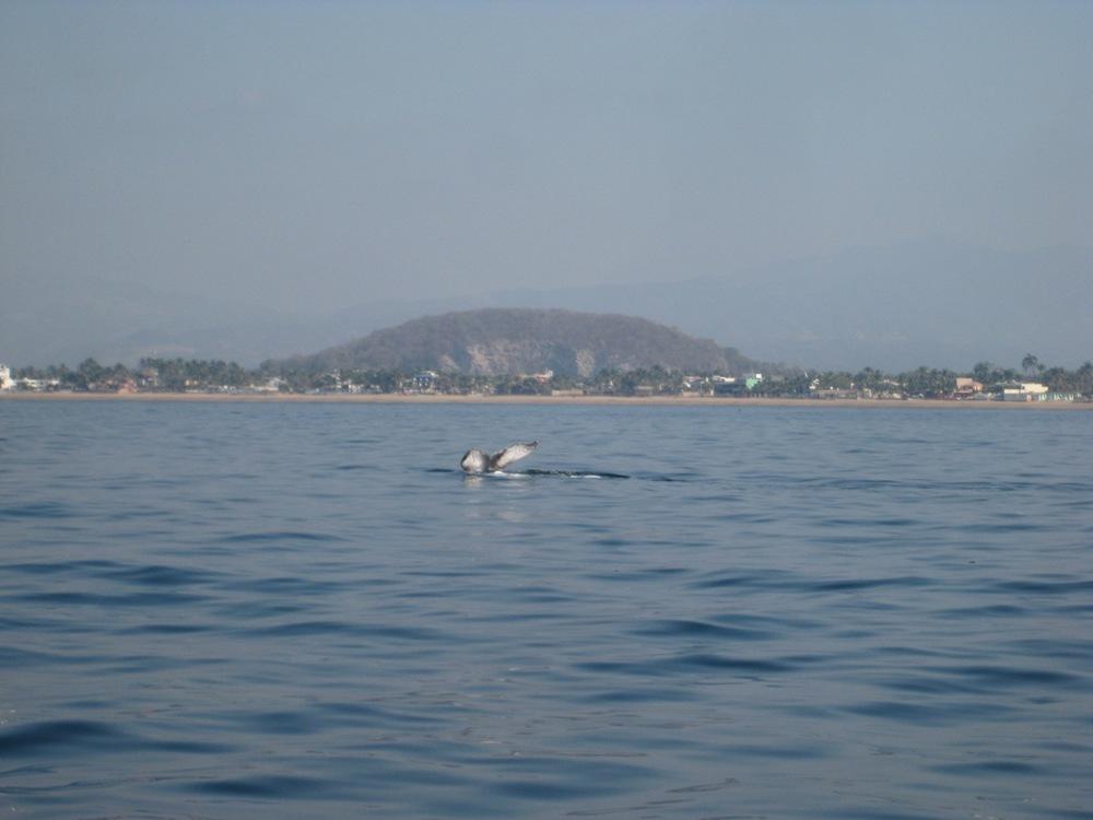 Tenacatita Boat Trip
