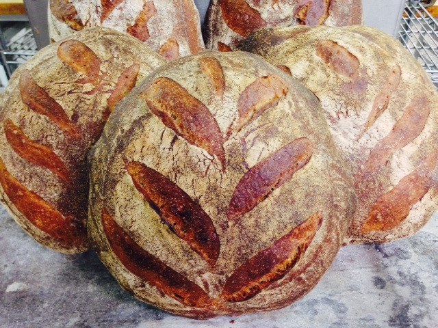 Beautiful loaves from  Stickboy Bakery  using Type 85 flour from Carolina Ground's 2013 wheat harvest.