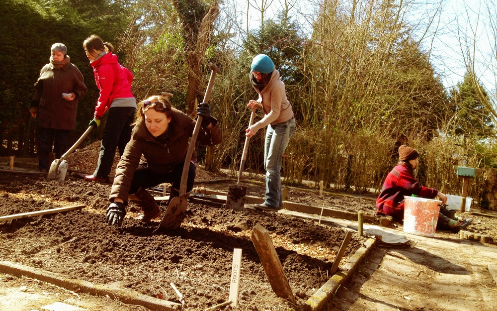 Planting the  biodynamic  bed, April 2013  Amsterdam Education Garden