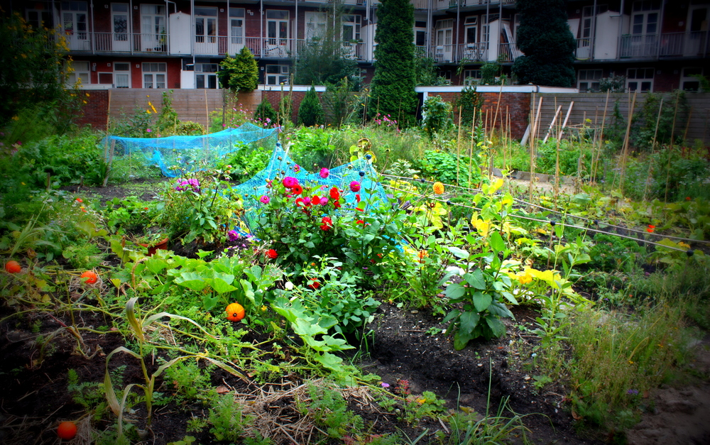 "Amsterdam West garden space, September 2012  Plot run by "" I can change the world with my two hands """
