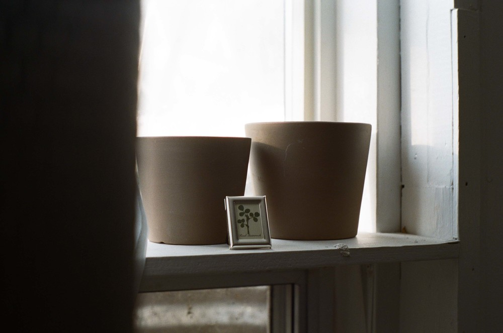 shelf_shamrock_natural_light_35mm_film_window_lauren_ashmore
