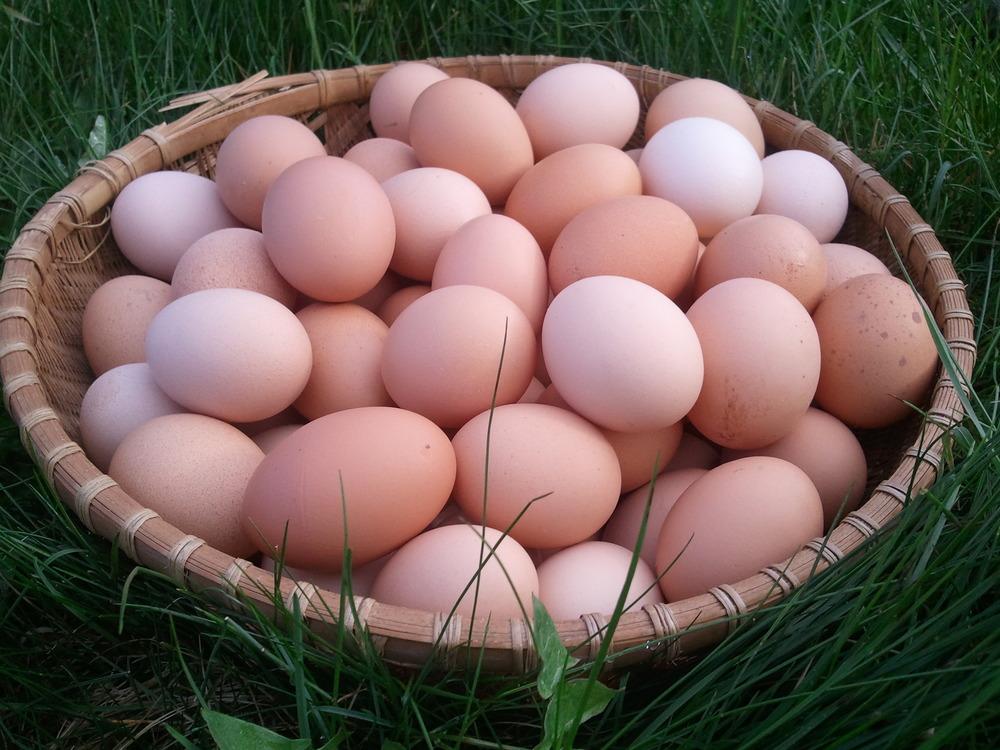 eggs3_basket.jpg