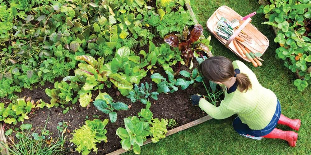 garden-full-size.jpg