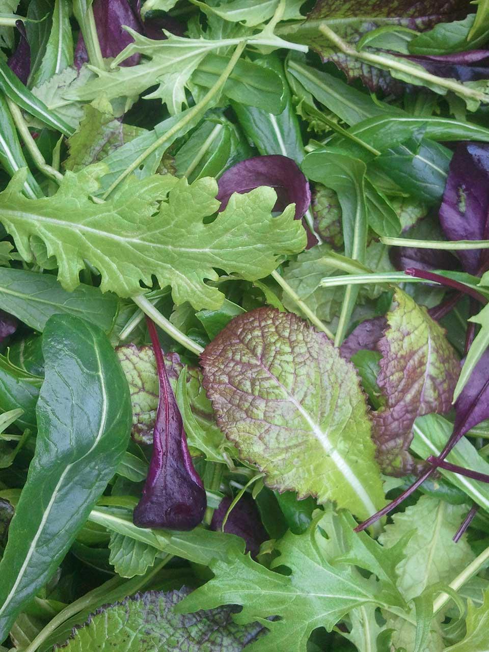 lettuce-mix.jpg