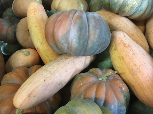 Heirloom pie pumpkins in storage at JSF