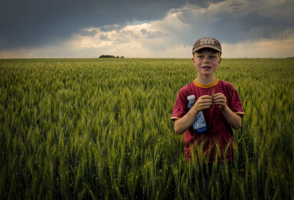 Wheat_Field002.jpg