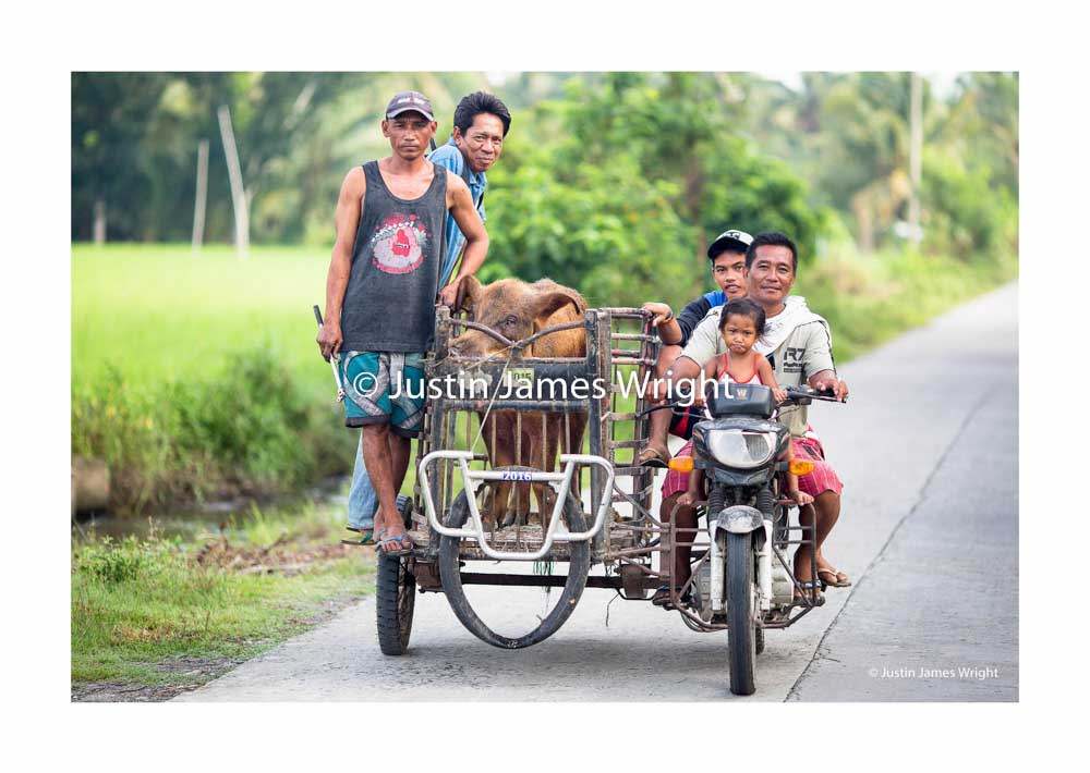 Provincial life   Sultan Kudarat, Mindanao, Philippines  A pig is transported on a tricycle to a neighboring farm for mating