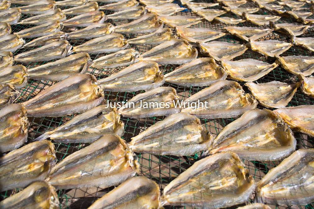 Dried Fish, La Union, Philippines   Philippine Image # 4147  If you wish to purchase a photography print of this image, or would like to license this image please contact us using the form below.  Please kindly include the Image Title and Image Ref # in your message, we will get back to you.