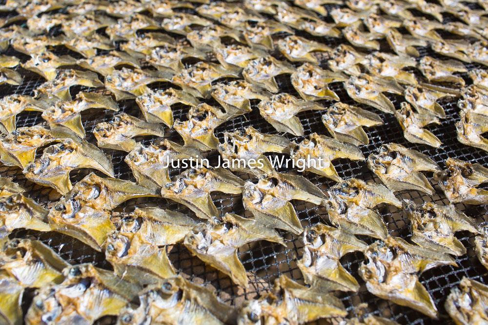 Dried Fish, La Union, Philippines   Philippine Image # 4148  If you wish to purchase a photography print of this image, or would like to license this image please contact us using the form below.  Please kindly include the Image Title and Image Ref # in your message, we will get back to you.