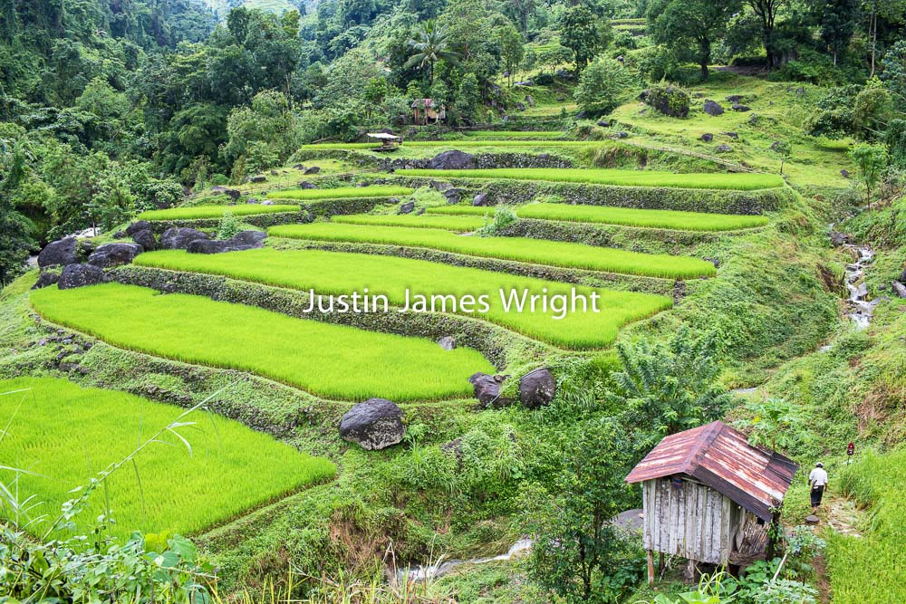Rice Terraces, Ilocos Sur, Philippines.   Philippine Stock Photo # 4207   Purchase a License   High Resolution Royalty-Free License   Small - Php 5,000.00   725 x 483 px (10.07 x 6.71 in)  72 dpi – 0.4 MP   Medium - Php 10,000.00   2122 x 1415 px (7.07 x 4.72 in)  300 dpi - 3 MP   Large - Php 19,000.00   5760 x 3840 px (19.2 x 12.8 in)  300 dpi – 22 MP   Details   Credit: Justin James Wright  Image # 4207  License Type: Royalty-Free  Release Info: No Release Required  If you wish to purchase the license for this image please kindly contact us via the Form below.  Please kindly include the Image Title and Image Ref # in your email, we will get back to you.