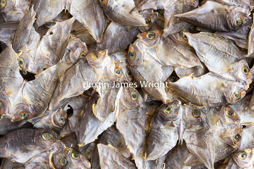 Dried Fish, Makati City, Metro Manila, Philippines.   Philippine Stock Photo 5262   Purchase a License   High Resolution - Editorial License   Small - Php 5,000.00   725 x 483 px (10.07 x 6.71 in)  72 dpi – 0.4 MP   Medium - Php 10,000.00   2122 x 1415 px (7.07 x 4.72 in)  300 dpi - 3 MP   Large - Php 19,000.00   5760 x 3840 px (19.2 x 12.8 in)  300 dpi – 22.0 MP   Details   Credit: Justin James Wright  Image # 5262  License Type: Editorial License  Release Info: Not Released  If you wish to purchase the license for this image please kindly contact us via the Form below.  Please kindly include the Image Title and Image Ref # in your email, we will get back to you.