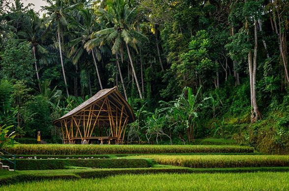 Image:Provided- Four Seasons Bali