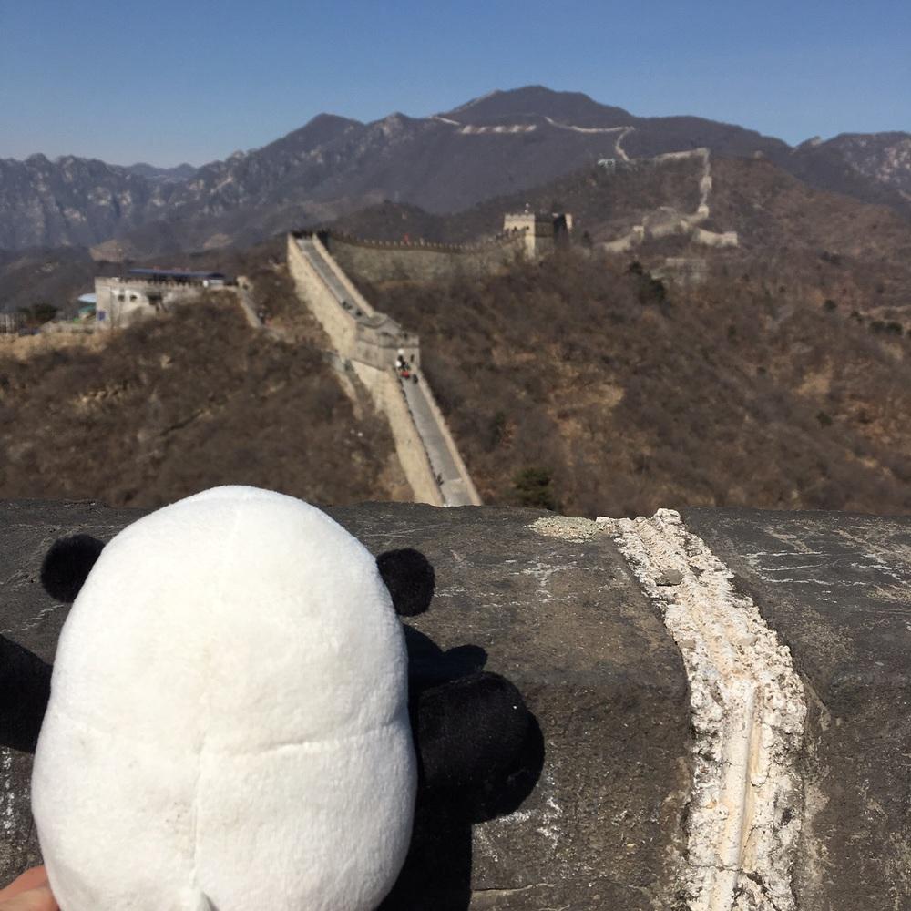 Mr Panda at the Great Wall.