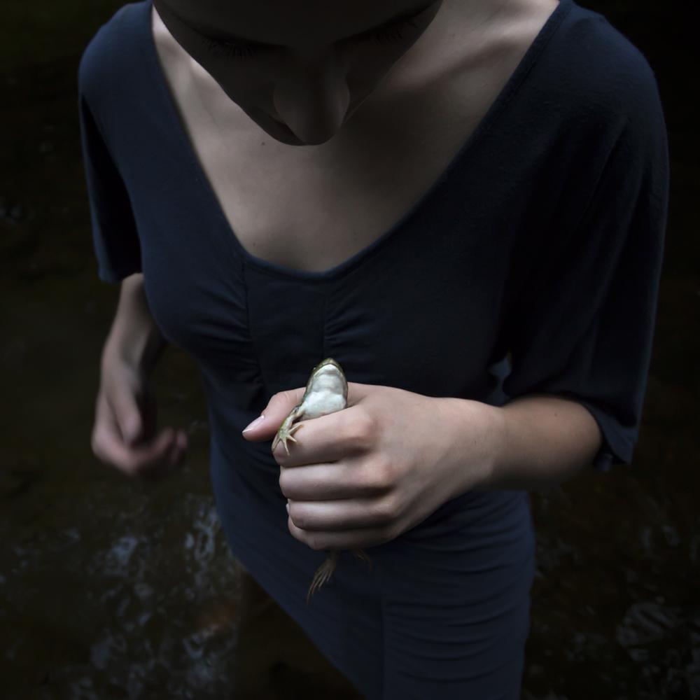 The Frog, Sierra, 2013