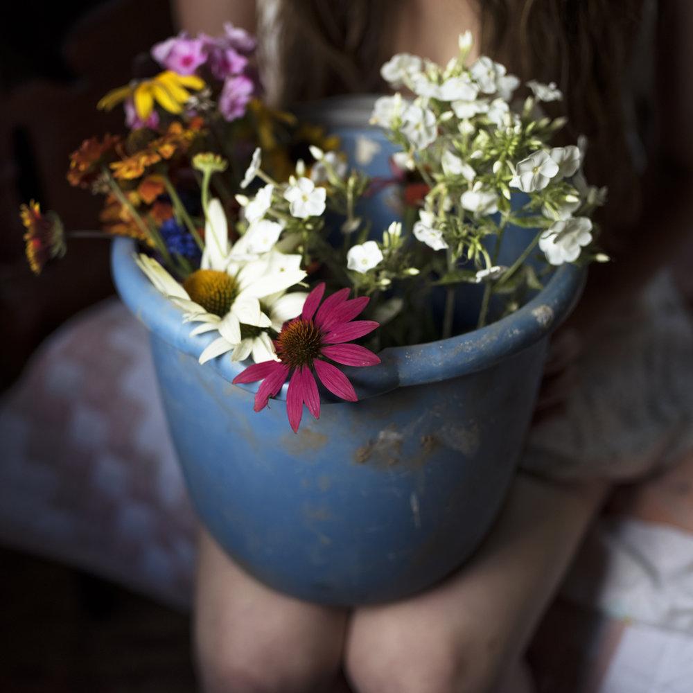 Wild Flowers, 2016