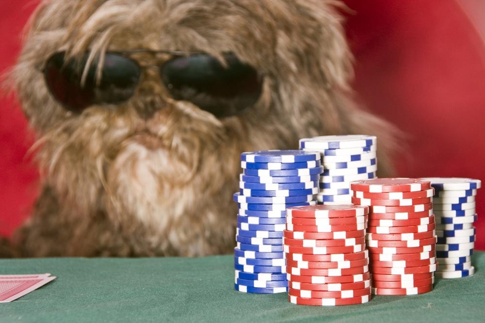 PokerBG3_web.jpg