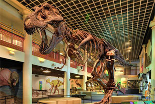 Dinosaur Hall in the Academy of Natural Sciences