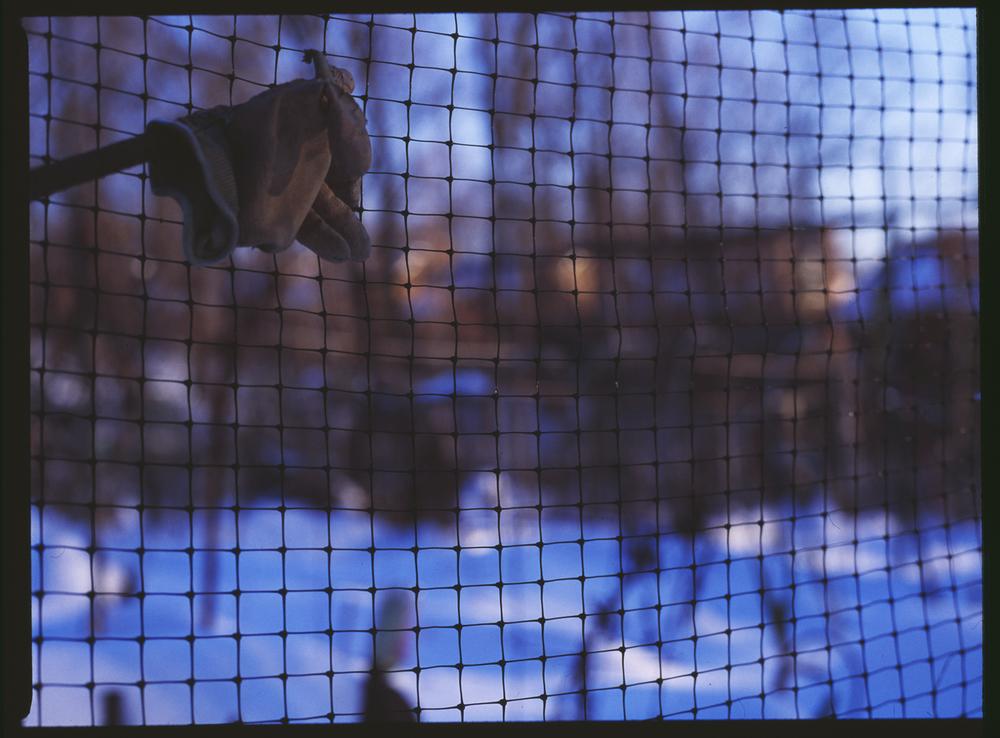 08_Protest, VictoryGarden#007_glove.jpg