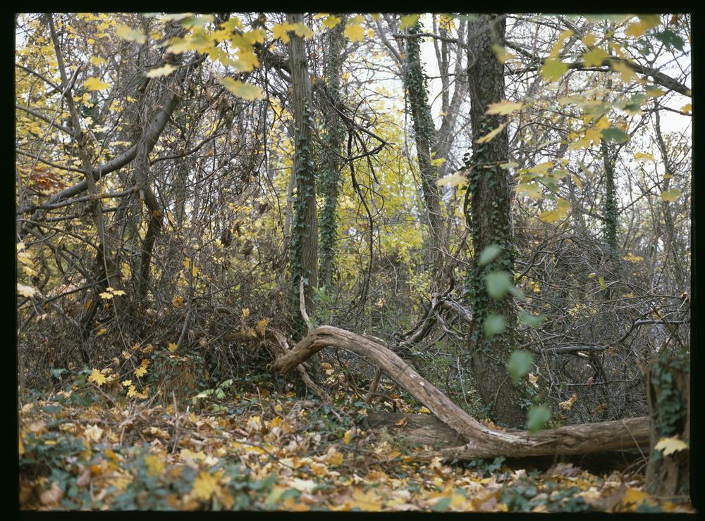 01_greentrees.jpg