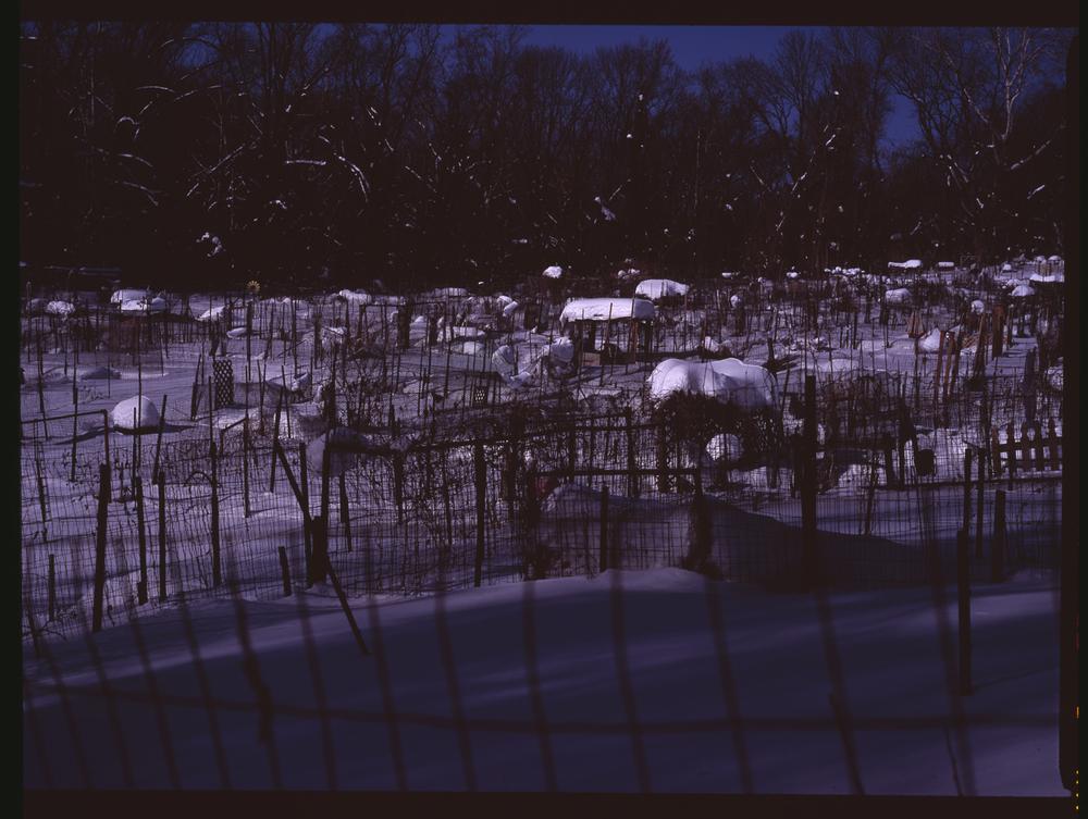 2010_nightgarden.jpg