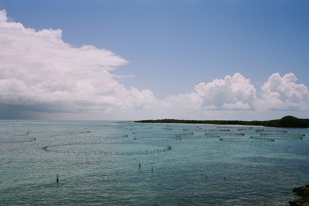 Provo, Turks and Caicos  April 2016  Nikonos V 35mm Color Film