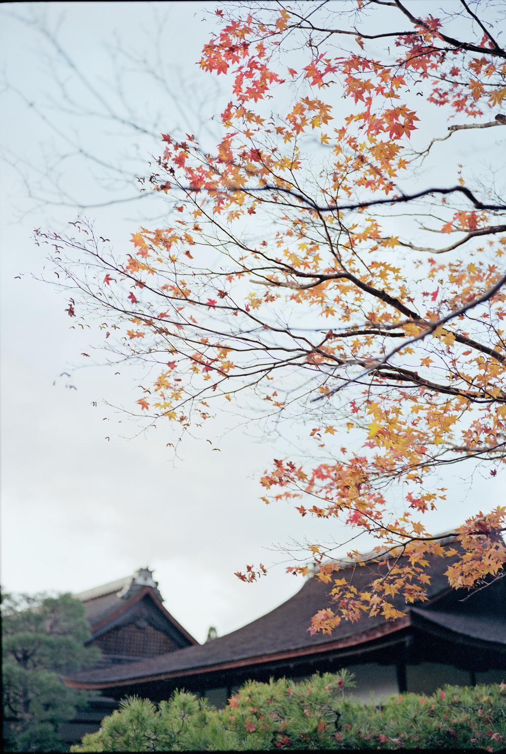 Fuji GW690, Kodak Portra 400