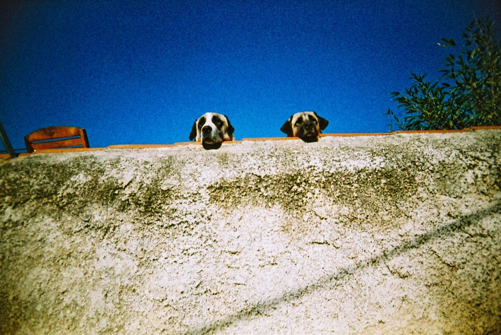 M1. Two dogs looking at a Singaporean, in Marseille.JPG