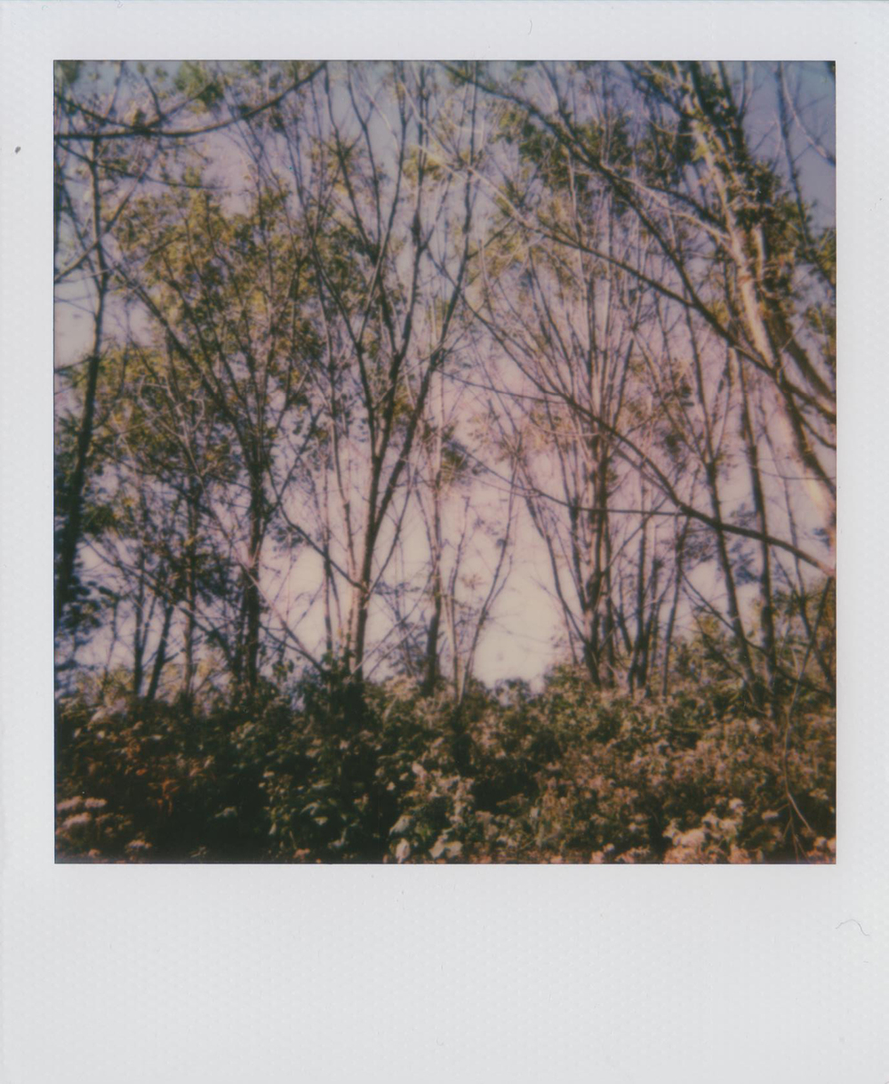 All images Polaroid Spirit 600 and Polaroid Spectra, Impossible Project film