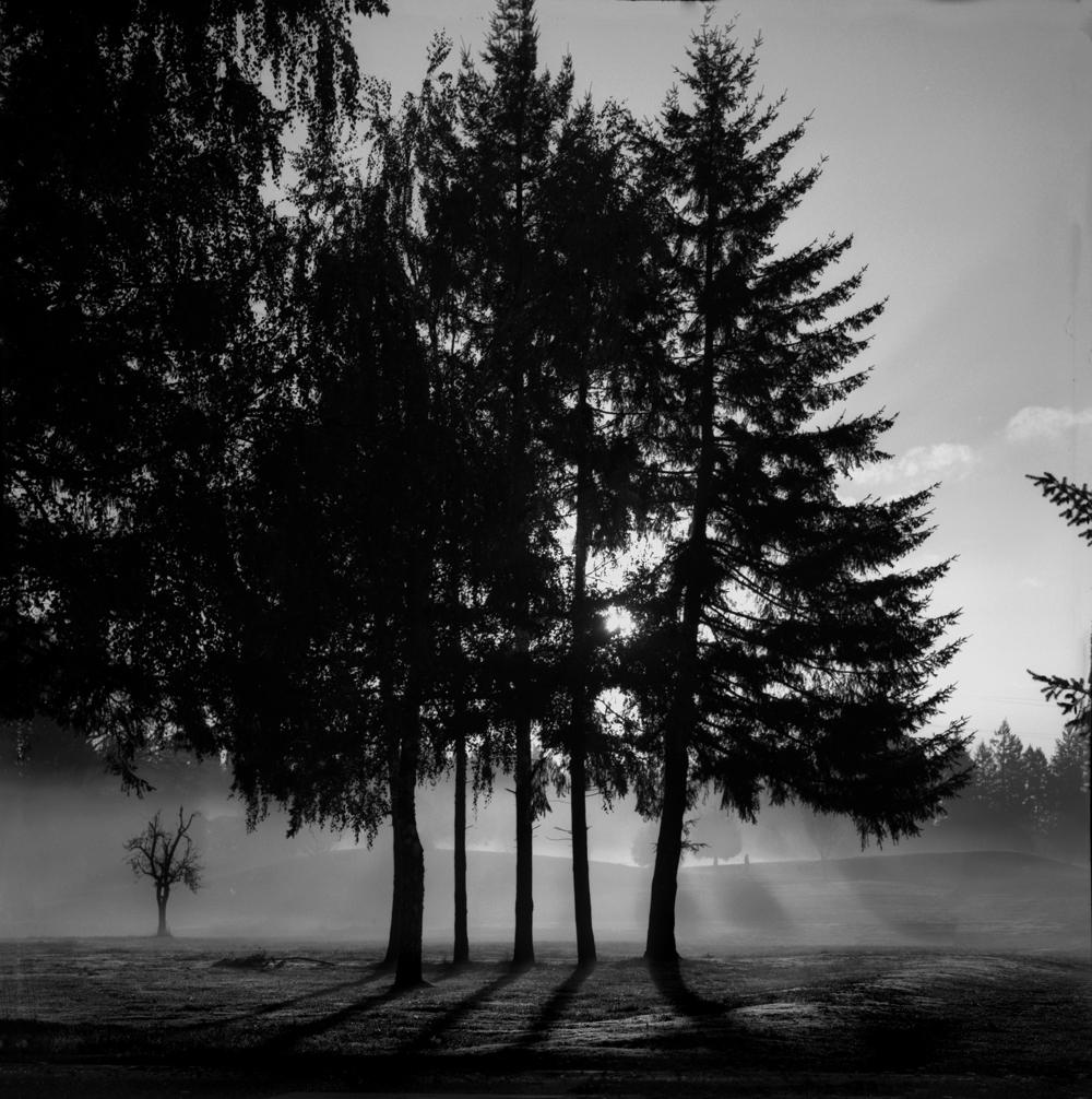 Fog | Hasselblad 500c | Sonar 150mm F4 | Kelly Shane-Fuller