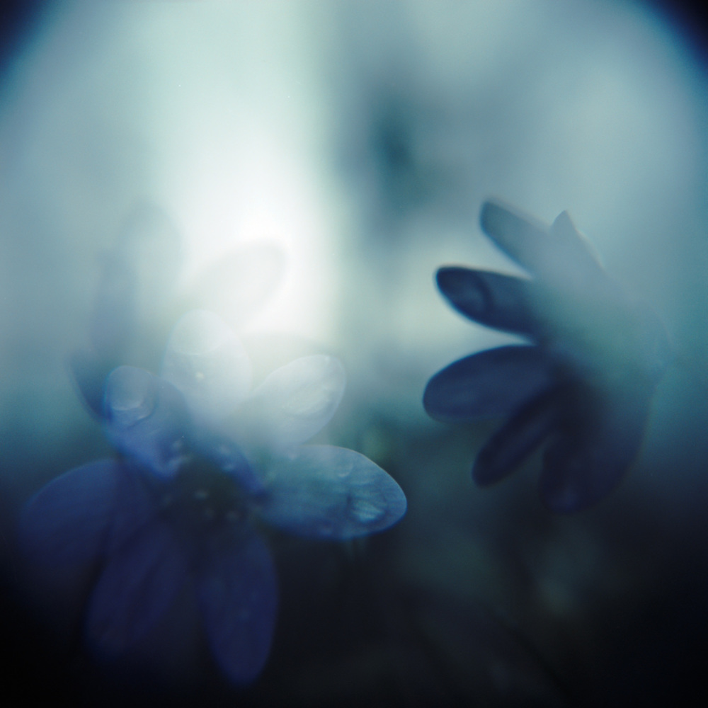 Untitled | Holga Macro | Fuji Provia 100 cross-processed in C41 | Marie Westerbom