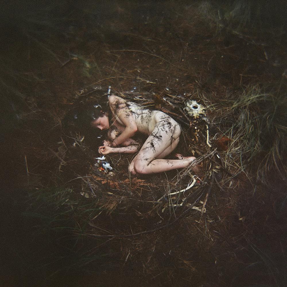 Birds Nest | Holga 120S | Steve Lovegrove