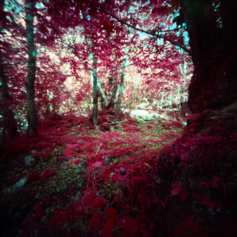 Woods in Red |Digna 6x6 Pinhole |Kodak EIR Aerochrome |Jesús Joglar