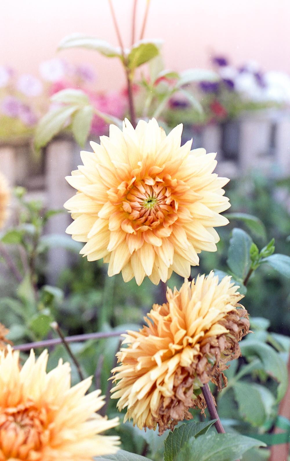 WGrove Flower SunflareLft FE2 S400 SCN040.jpg