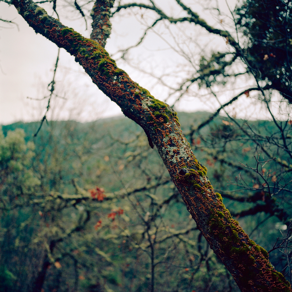 Branch | Hasselblad 500cm Kodak Ektar | Colton Allen
