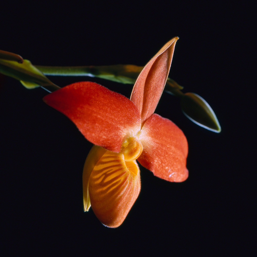 red orchid | bronica sqa | 110mm lens | provia 100f | howard sandler