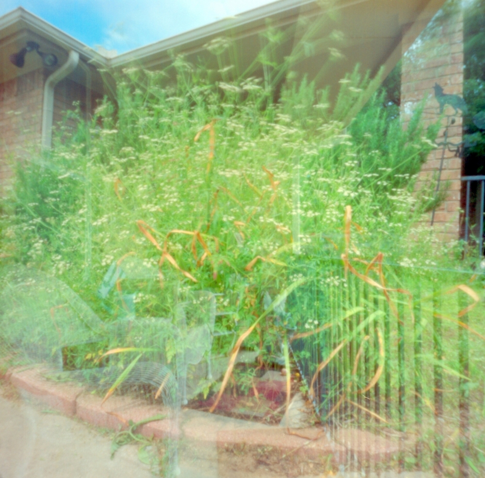 Front Yard Double Exposure