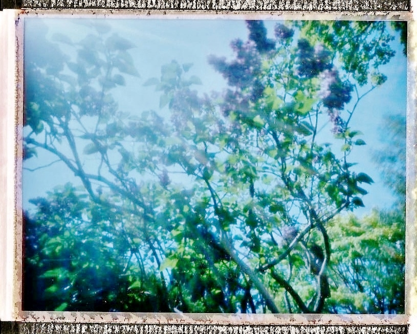 Lilac, FP100C
