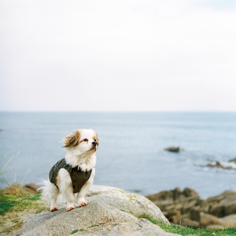 Our Retired Explorer | Fuji 400H | Pentacon Six 80mm