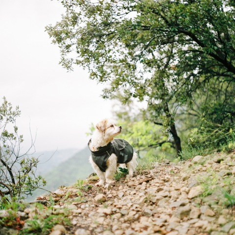 Our Retired Explorer – Revisited | Portra 800 | Pentacon Six 80mm