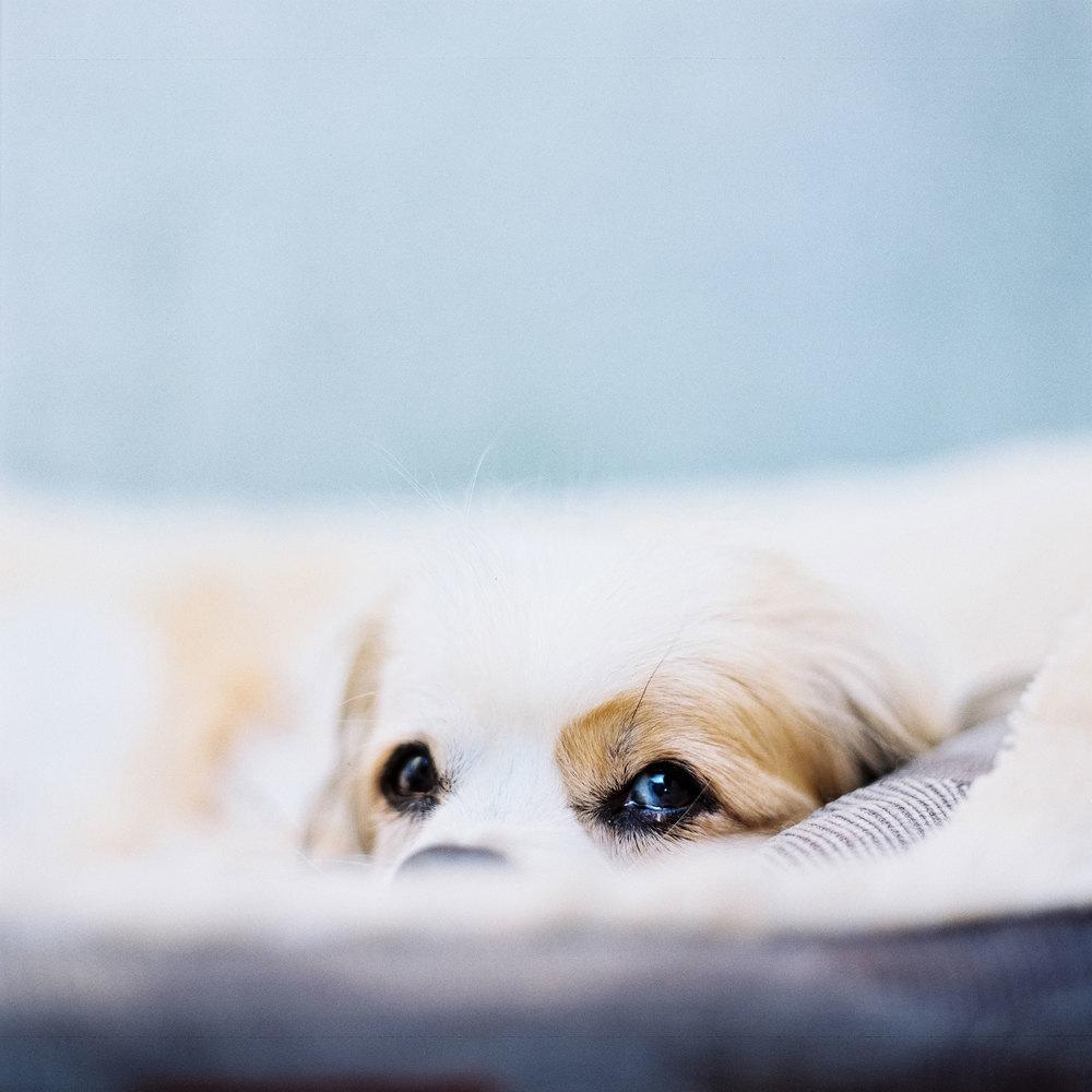 Nils Karlson | A senior's puppy eyes | RZ67 | 110mm | Portra 800