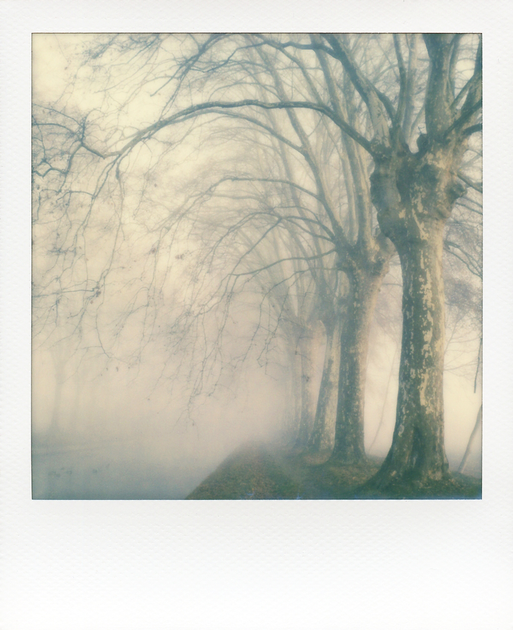 Le Canel | SX70 | Impossible Project 600 Speed Film | Vincent Gabriel