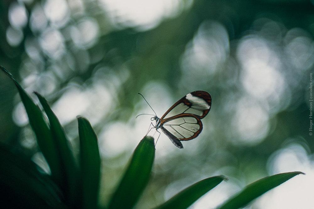 Translucent | Olympus OM4ti | Zuiko 40mm f/2 | Agfa CT Precisa | Roger Harrison
